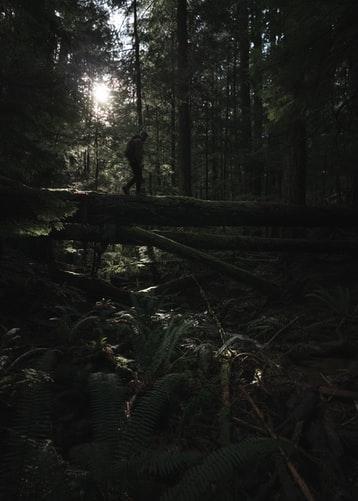 comment survivre en forêt